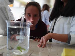 Photosynthèse et dioxygène